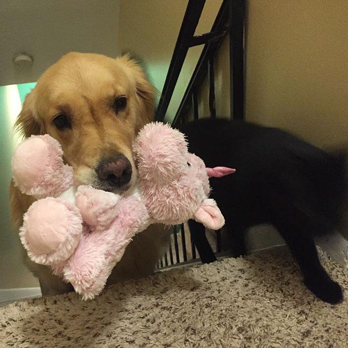 dog-brings-toys-mojito-14