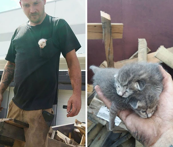 man-saves-kittens-wood-dumpster-11