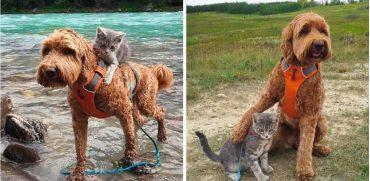 Котёнок нашел свою собаку и пошел за ней... Дружба с первого взгляда!