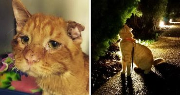 Самого грустного кота Бенбена хотели усыпить... Но неожиданно за ним пришли!