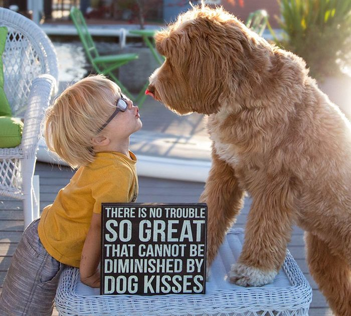 foster-child-labradoodle-dog-book-buddy-reagan-5