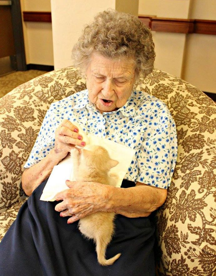 retirement-home-shelter-cats