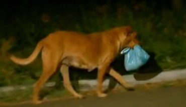 Собака пропадала каждую ночь. Хозяйка проследила за ней и... поняла, что это не собака!