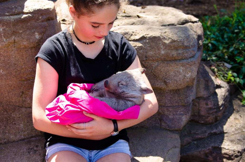 mammals_common_wombat2-1030x682