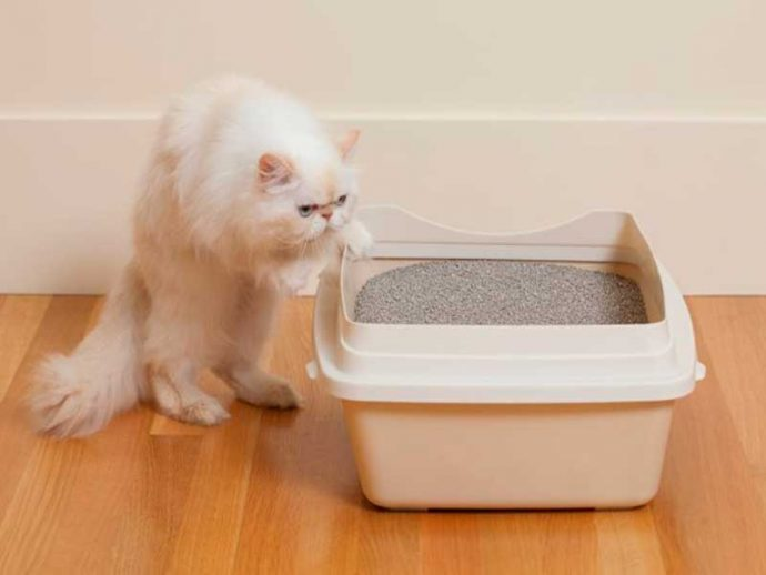 illegal uses for cat litter