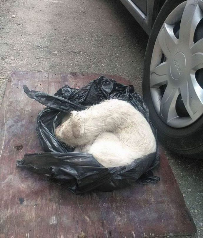 puppy-found-plastic-bag