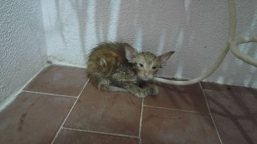 cat save