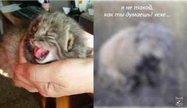 Хозяин нашёл  в сарае горстку котят и решил усыновить... Но что это?! Такого шикарного сюрприза он никак не ожидал!!! :)