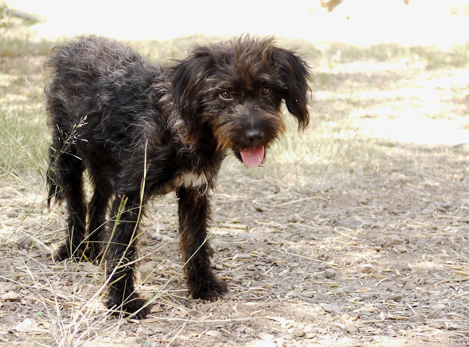 Отпуск на Крите у этой девушки чуть не стал шоком. Но случайная собака спасла её и... поделилась тайной!!