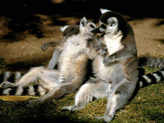 1487091030_tender_moments_in_the_life_of_animals_1