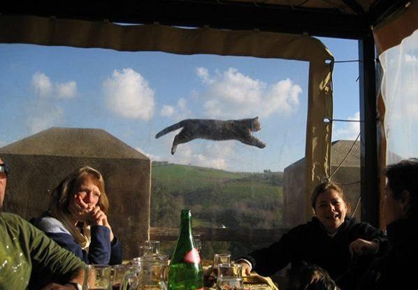 1491842514_cats-fotobomb-hoohma14