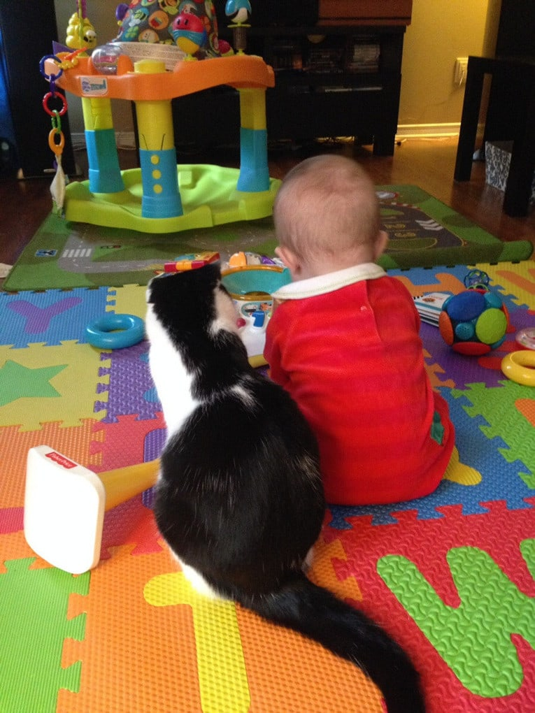 pictures-with-cats-and-children-dip-feed-6