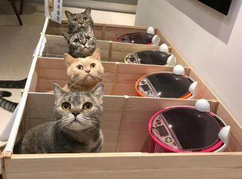 Плохой Тефтелькин! Кот отбирал еду у собственных котят… И вот что придумал хозяин!