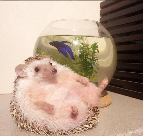 Публичная жизнь домашних животных! Топ самых популярных питомцев в Instagram рис 5