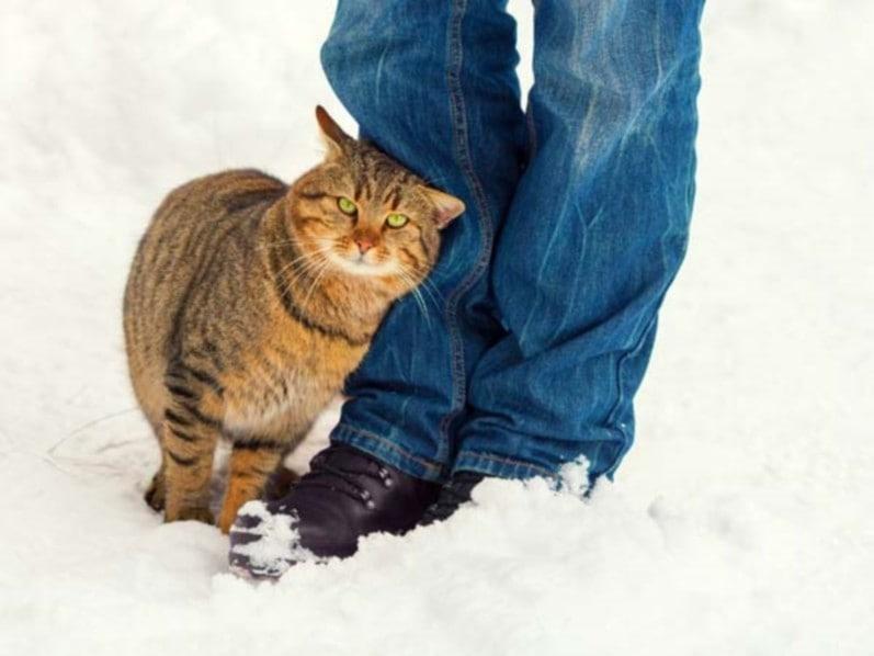 kitty's best cat litter