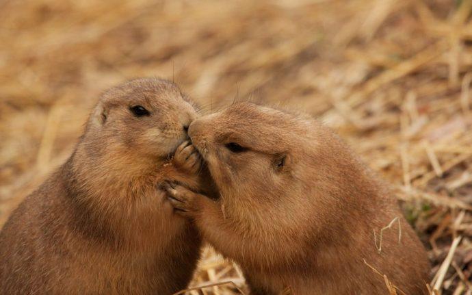 """""""Я буду любить тебя вечно!"""" Пары-однолюбы из мира природы :) рис 2"""