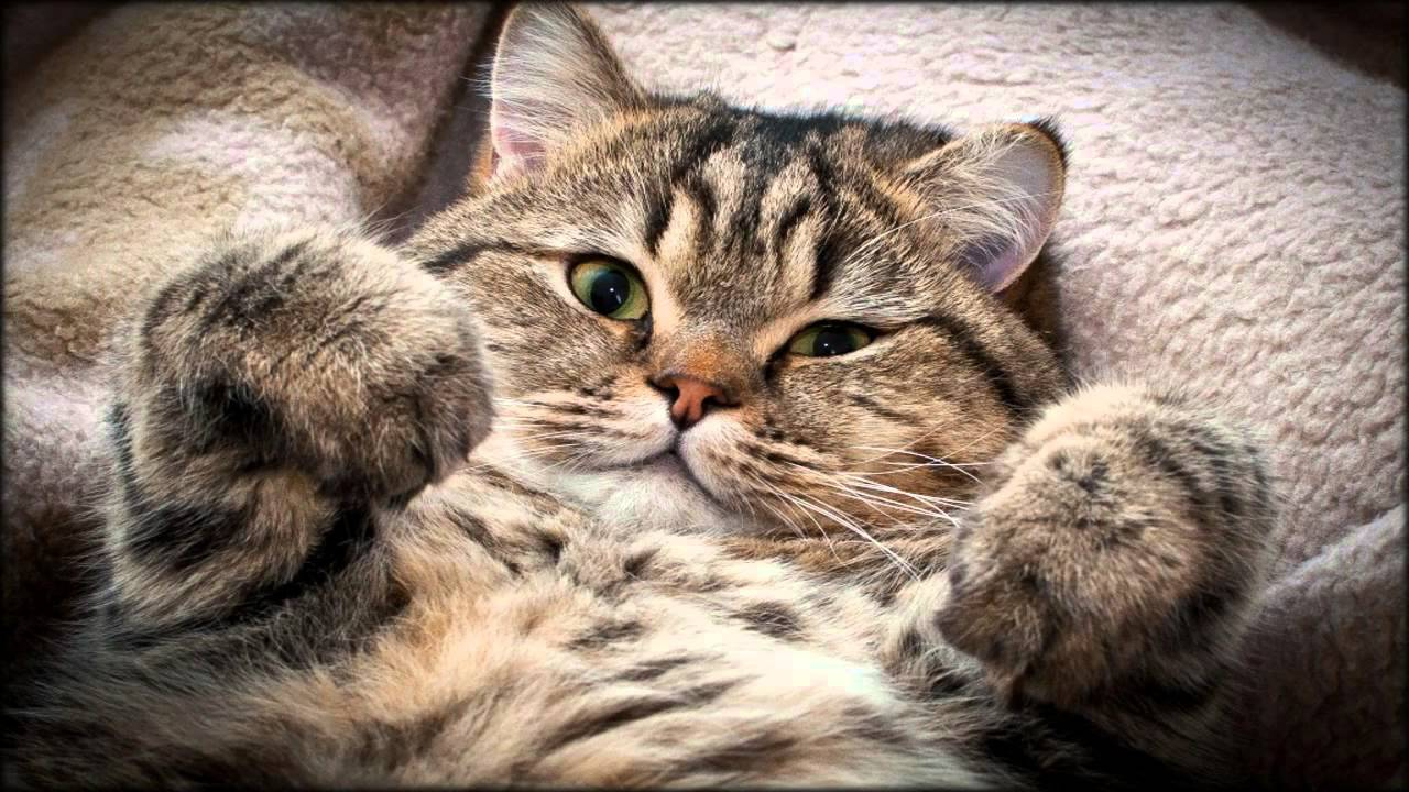 Внимание, кому счастье на блюдечке? Лови вакансию твоей мечты: обнимать котов за деньги! рис 3
