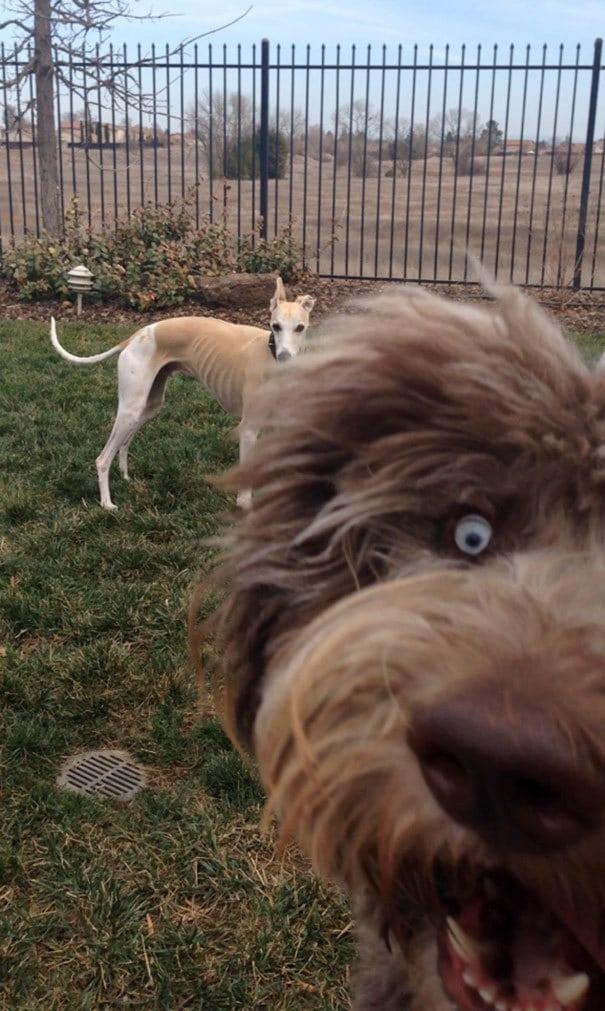 funny-dog-photobombs-85-58ef44f59bc6c__605