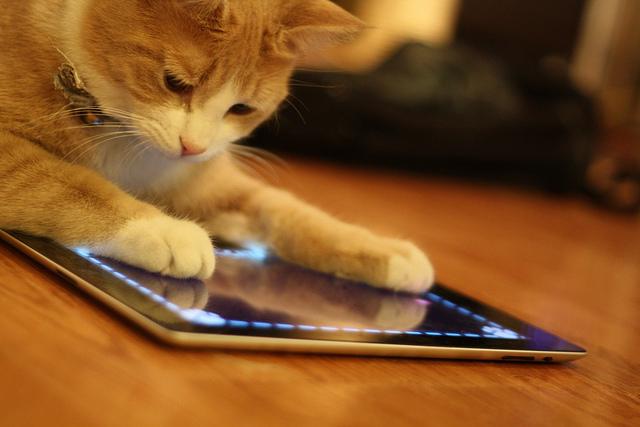 Кот ipad