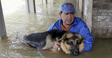 До слёз! Трогательные кадры о том, как люди спасали питомцев во время урагана!