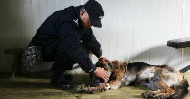 Они состарились и стали ненужными... Мужчина придумал, как помочь пожилым собакам!