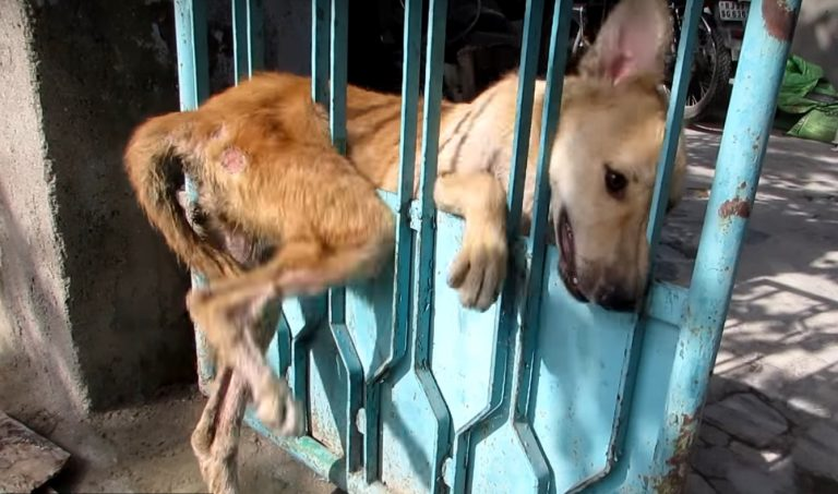 animals cry for help It is perhaps the only animal that kills abuse and even other animals for fun it destroys the killing of wild animals without pity for their skin, bones and meat, although it is not a carnivore by nature and maintains the sacred life.