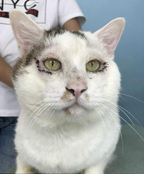 27072017-cat-without-eyelids-5