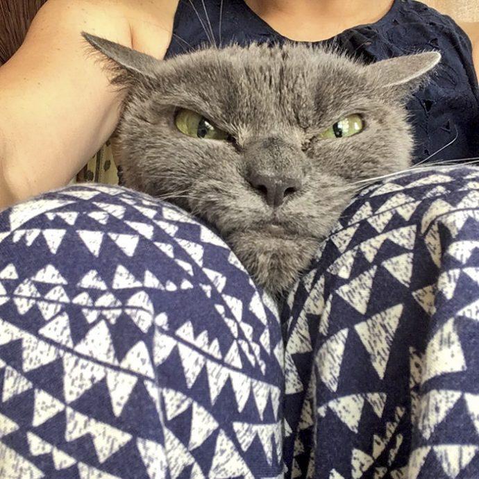 always-angry-cat-Shamo-29-59afa0ccabbfe__700