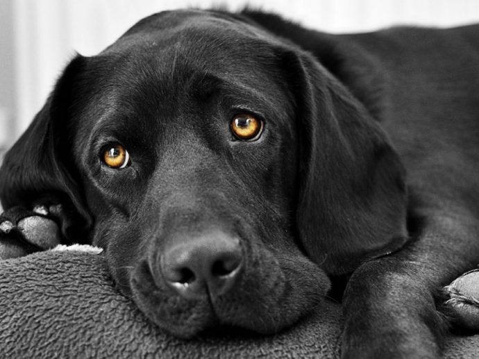 b_0_650_00___images_article-dogs_article-dog-1