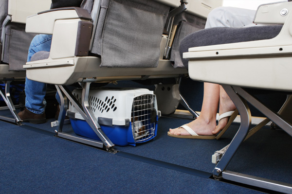 cani-in-aereo
