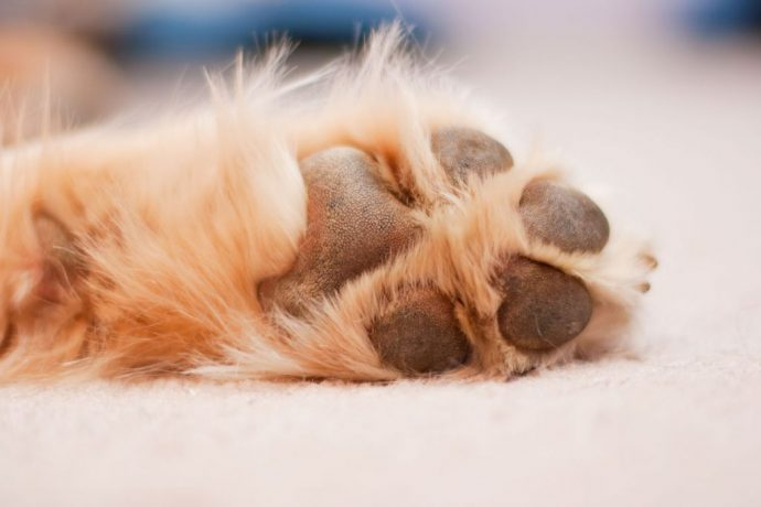 canine-chiropody-paw-pad-and-claw-injuries-and-how-to-prevent-them-5193f3bc76dc5