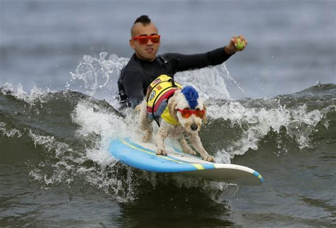 dog-surfing-today-170806-inline-03_677a39e938ebab2e078d55d20f2aec92.today-inline-large