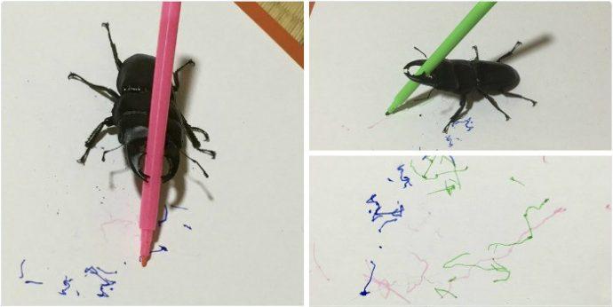 drawing-bug-spike-the-beetle-japan-38-59b8f3af89677__700