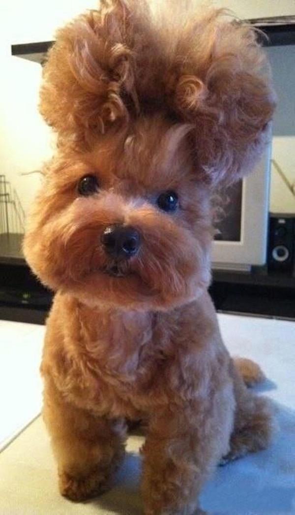 even-animals-have-killer-hairs-days-24-photos-18
