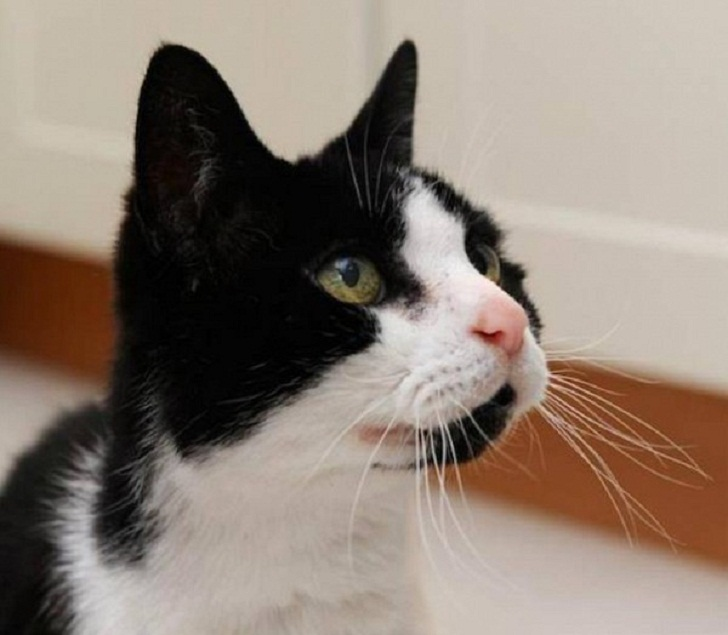 cat pees in litter box but poops on floors