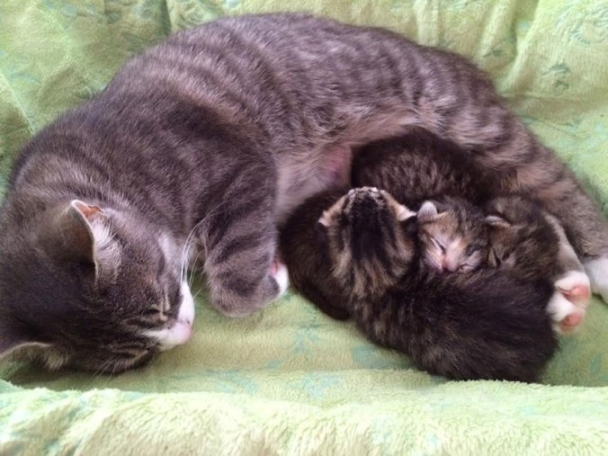 mother-cat-lost-kittens-adopted-3-abandoned-4