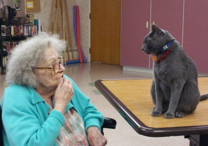 Старушка с котом