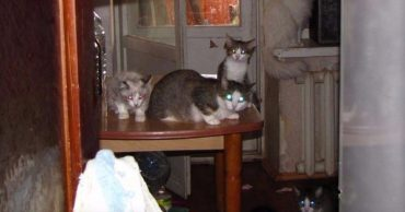 Неравнодушная бабушка приютила котов, но не учла момент биологии... Теперь армия писанных красавцев ищет дополнительных хозяев!