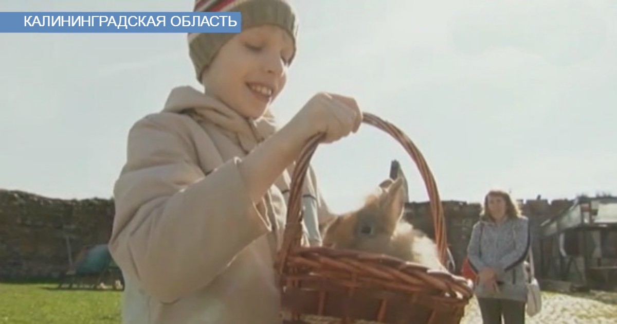 """""""Трогательная сказка"""": в Калининграде появился действительно правильный проект с участием животных!"""