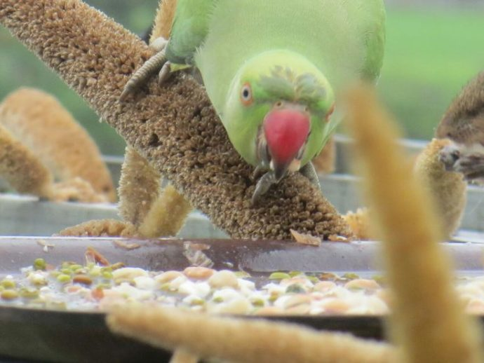 Birdman-Gujarat2