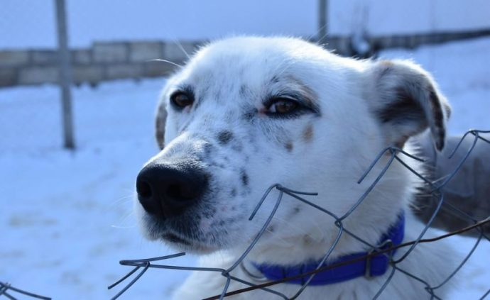 Helens-house-of-hope-A-new-life-for-the-abandoned-and-mistreated-dogs-of-Bulgaria-59db5a3e9fba2__880