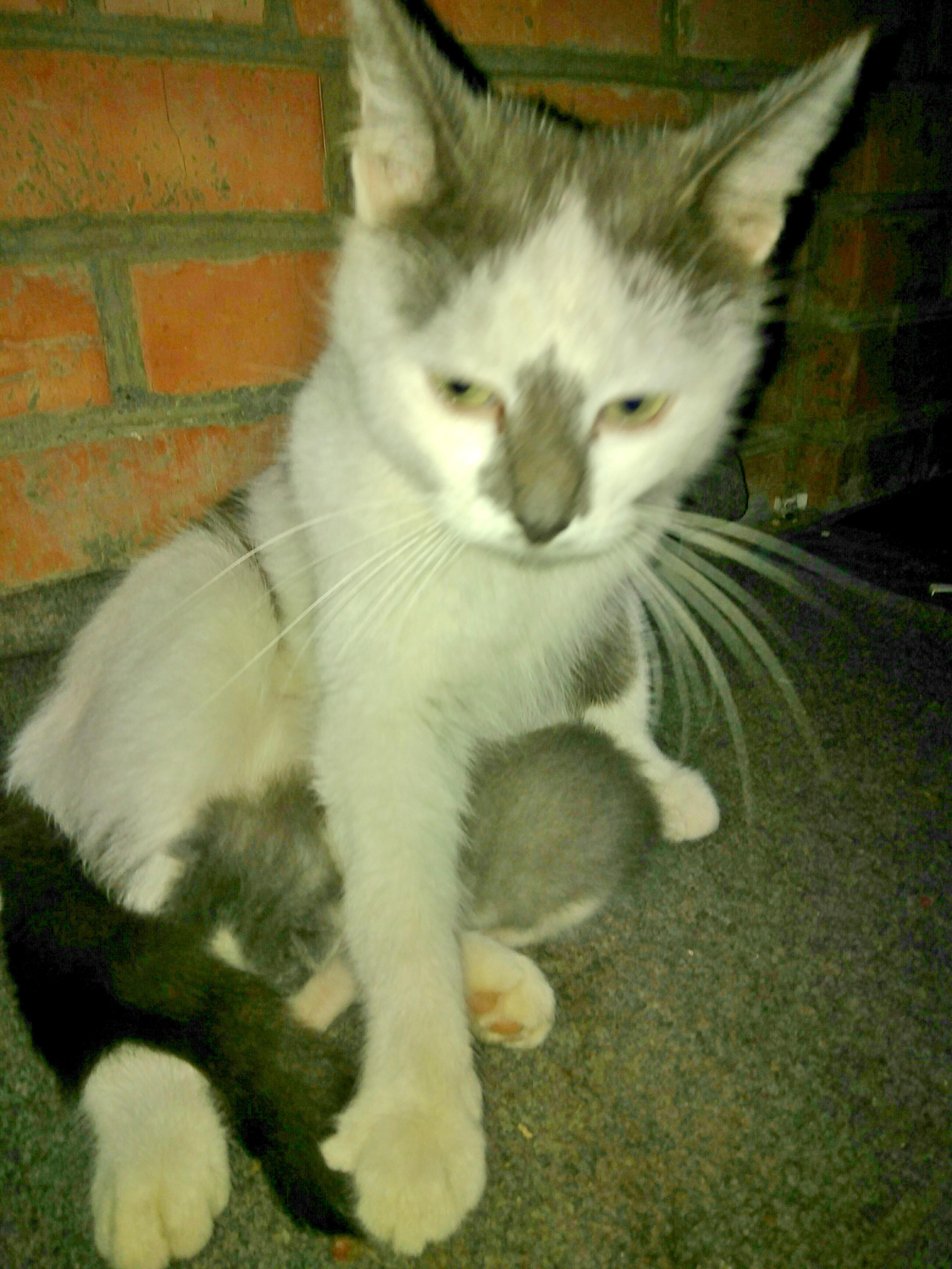 """""""Спасу хотя бы последнего!"""" Хозяева не захотели сохранить её детей, и кошка сбежала от них с малышом в зубах... рис 3"""