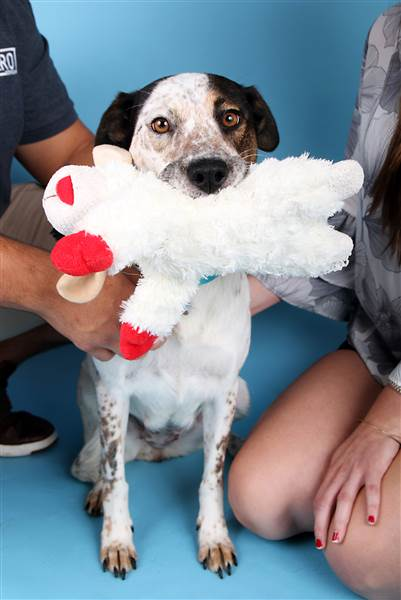 adopted-dog-today-170923-inline-02_311d206e023a0ae83f6cd6e7e1ee4e65.today-inline-large