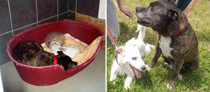 blind-dog-guide-best-friends-abandoned-rescued-stray-aid-shelter-glenn-buzz-6