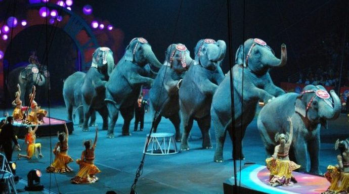 circus-is-over-for-elephants-e1508450339544-800x445
