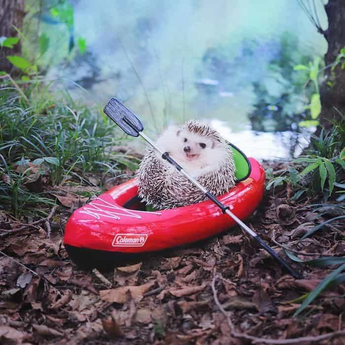 cute-hedgehog-azuki-6-59e5aa28edca8__700