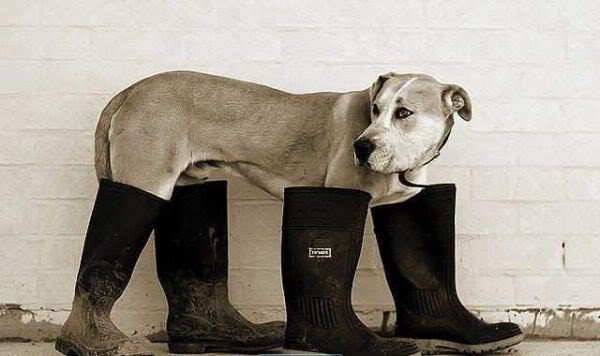 dog-boots-4