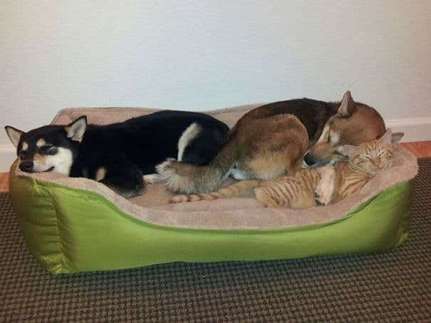 living-with-multiple-pets-302-59ba7d09cefe7__605