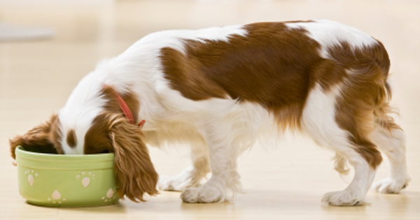 nutritional-requirements-for-dogs