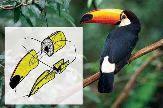 Тукан (Toucan) 2